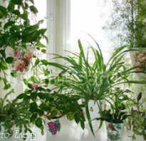 Полки для цветов на окно