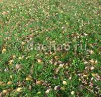 Нужно ли собирать листву в саду осенью