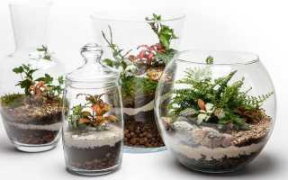 Цветы в стеклянном кубе
