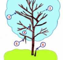 Когда нужно обрезать деревья осенью или весной