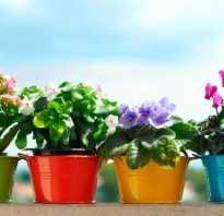 Подкормка для комнатных цветов в домашних условиях