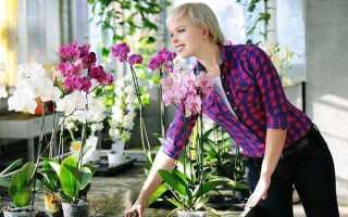 Орхидея для дома хорошо или плохо