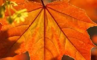 Сад осенью что делать