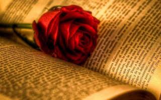 Роза суоми