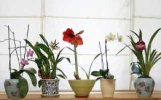 Цветы в спальне по фен шуй
