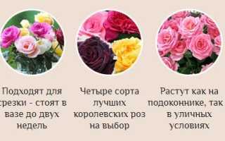 Сорта роз для ленинградской области