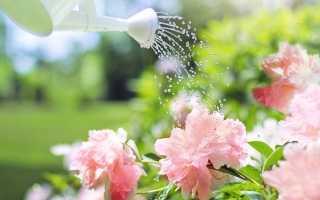 Пион ито гибрид джулия роуз