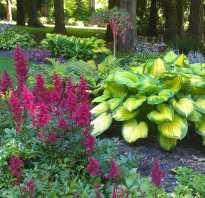 Цветы для тенистых мест многолетники