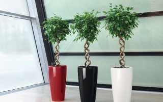 Комнатные растения для темных помещений
