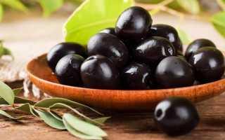 Выращивание оливок в России