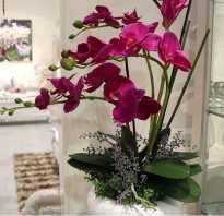 Орхидея семенами в домашних условиях