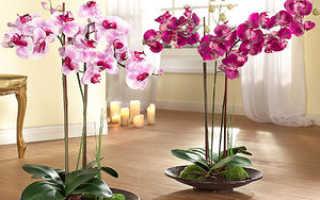 Фаленопсис пересадка в домашних условиях