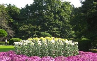 Цветы не требующие полива