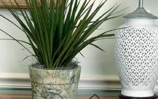 Неприхотливые растения для дома