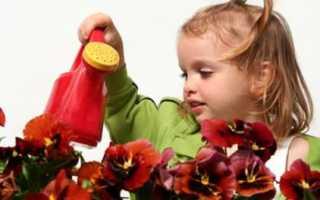 Почему сохнут листья у герани комнатной