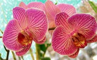 Что делать если отцвела орхидея
