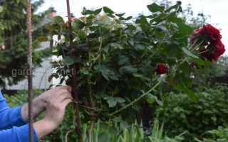 Как сделать штамбовую розу