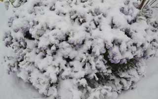 Клематис уход осенью подготовка к зиме