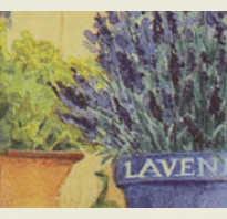 Можно ли вырастить лаванду дома