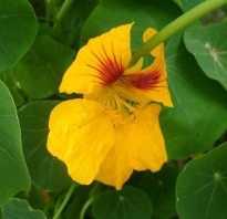 Какие растения продолжают цвести осенью