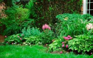Кустарники для тенистых участков сада