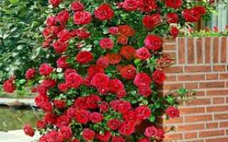 Подпорки для роз
