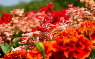Красивые красные цветы