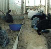Содержание кроликов зимой в теплице