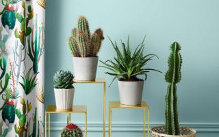 Фотографии кактусов