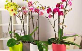 Цветок орхидея как ухаживать